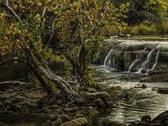 Hanging On (keith_shuley) Tags: bullcreek austin texas water waterfall fall fallcolors olympus