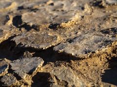 Eroding biocrust