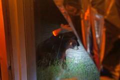DSC03792 (deerhake.11) Tags: bear bonarlake