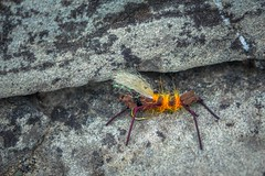Strange looking insects on the banks of Castle River.