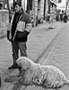 Rug walker (Steve Wheadon) Tags: street dog budapest canon400d