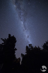Forest stars (neco.w) Tags: blue trees sky tree forest way stars star astro clear astrophotography milky nigh silhouettte