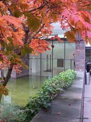 autumn (Adfoto) Tags: autumn trees bomen herfst