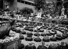 #Ofrenda #DadeMuertos #InstitutodeBiologa #UNAM (Greitas) Tags: square squareformat iphoneography instagramapp uploaded:by=instagram