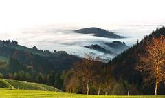 Schwarzwald: Nebel zieht auf (myNex foto) Tags: nebel sony herbst freiburg schwarzwald horben