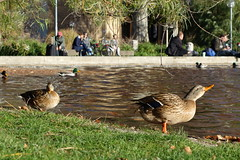 Ducking around. Stuttgart, Germany (Rodrigo P.C.) Tags: travel germany europa europe stuttgart viagem alemanha estugarda