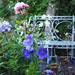 August in the Garden - Explored