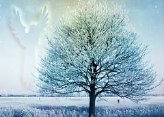 peace on earth to everyone! (♥Adriënne - catching up......) Tags: winter tree dedication angel peace sidebyside textured terneuzen winterinthenetherlands addyvanrooij langsdekreek ♥adriënne