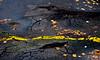 Asphalt Eruptions (Orbmiser) Tags: winter oregon portland nikon cracks asphalt eruptions contours bulges d90 55200vr