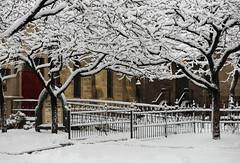 Snowy Branches (Karen McQuilkin) Tags: snow utah ogden episcopal onetime winterstorm oldestchurch snowybranches karenmcquilkin itwasbuiltin1875andaddedtothenationalregisterofhistoricplacesin1973 attendedonce