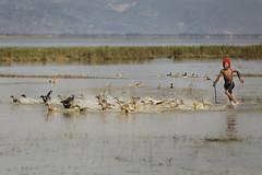 IMG_39353 (nilesh rony) Tags: boy people fun duck moment sylhet lifeisbeautiful traval shunamgonj tanguarhawor