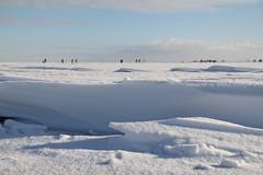 winter landschap (winter landscape) op de Gouwzee (C. Bien) Tags: winter snow holland ice netherlands iceskating sneeuw skating nederland ijsselmeer noordholland waterland ijs schaatsen northholland gouwzee laagholland