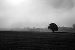 stra Torp - Ilford Delta 400 (magnus.joensson) Tags: sweden swedish skne field countryside nikon fm3a voigtlnder nokton 58mm f14 sl ilford delta 400 stand 1100 rodinal epson v800