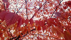 Lehtinauha (Anne Susan Karine) Tags: autumn syksy