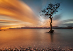 Milarrochy Bay (Mark Callander) Tags: lochlomond milarrochybay scotland sunset long exposure tree
