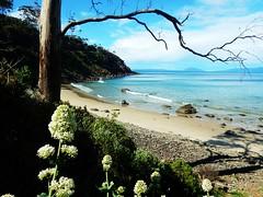 East coast beach - Tasmania - Australia (pacoalfonso) Tags: pacoalfonsocom travel australia tasmania beach nature coast wild landscape