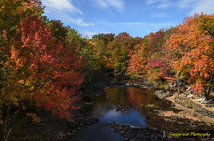Salmon Falls River (Tangled Web Photography) Tags: fallfoliage autumncolor forest woods newhampshire maine newengland naturephotography rivers reflections