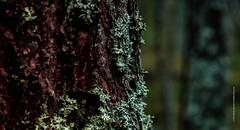 Contrast (imagomagia) Tags: art artphoto artphotography autumn cinematography forest fujix fujifilm naturallight trees