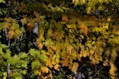 Pink Lake (Roger Daigle) Tags: pink lake trails gatineau park quebec autumn nikon