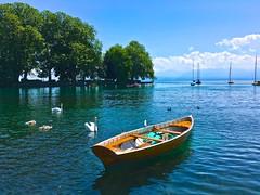 Cygnes sur le lac (JeanbaptisteM) Tags: lac lman suisse iphone mer sea cygne oiseau ciel sky bird fleur flower color summer voyage trip france paysage beaut