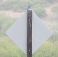 IMG_7624 (misterlevel) Tags: bird western bluebird webb