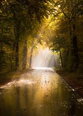Rain on a sunny day (Olof Virdhall) Tags: rain sun forrest road tree leaves autumn canon eos5 mkiii olofvirdhall