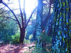 Hope  @AppLetstag #energy #mindfulness #gratitude #happiness #spirituality #consciousness #compassion #buddhism #wisdom #motivation #positivity #spiritual #relax #art #spirit #breathe #awareness #peace #zen #videooftheday #instagood #instavideo #videogram (magicpicturesricardoalmeida) Tags: compassion natureperfection motivation buddhism spirituality bestoftheday videogram mindfulness consciousness art naturelovers peace instavideo treescollection treeporn happiness spirit energy instagood relax awareness gratitude instagramvideo spiritual positivity wisdom natureaddict zen breathe videooftheday