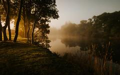 The Black Water (Greig Reid) Tags: garden morning atmospheric scotland contin river mist magical sunrise trees blackwater landscape