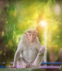Model Shot (Ajinhari) Tags: nikond7000 nikkor55200mmafsdx nikor55200mmafsdx outdoorportrait monkey mukkombu trichy ajinhari