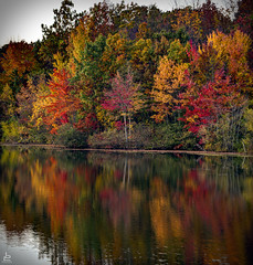 Lakeshore Entertainment LLC (Jersey JJ) Tags: lake shore lakeshore entertainment llc hdr fusion autumn foliage colors reflection pond water mirror trees peaceful easy feeling d750 j2