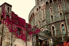 Beautiful place. (andreea_loredana) Tags: windsorcastle flowers florar flora building day focus princess king queen beautiful explore canoneos750d lens flickr andreealoredanamihailiuc cute lovely love