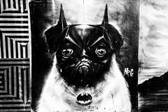 Batpug (Leighton Wallis) Tags: sony alpha a7r mirrorless ilce7r 1635mm f40 emount bondibeach tamarama sydney nsw newsouthwales australia sculpturebythesea 2016 sxsbondi2016 batman bat dog pug graffiti mural wall