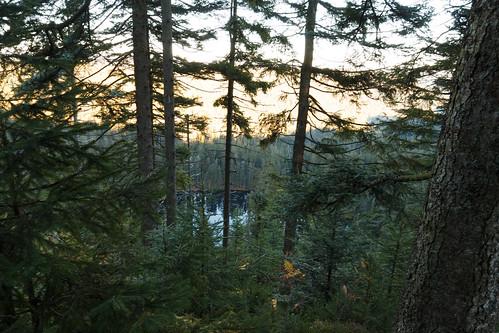 Le Wildsee à Baiersbronn