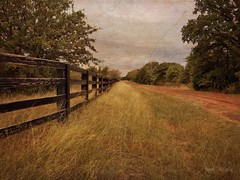 Once upon a country road. (Explored 11-21-16) #fence #fencefriday #texas #stackables #stackablesapp (peppermcc) Tags: fence fencefriday texas stackables stackablesapp