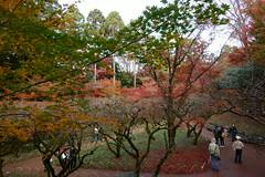 DSC02811 (MrSUIZOU) Tags: 京都 紅葉 北野天満宮 平野神社 十月桜