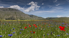 Remembering warmer times ... (Janet Marshall LRPS) Tags: pianogrande montesibillini umbria italy meadow flowers poppies sibillinimountains plain cornflowers