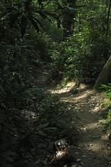 sunny path (Molly Des Jardin) Tags: park trees light plants usa sun green rock stone forest rocks state pennsylvania earth path walk rocky sunny dirt shade lancaster dappled shady 2014 undergrowth susquehannock drumore 43215mm