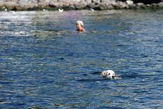 *** (TheDeepestPurple+) Tags: sea summer dog pentax odessa ukraine jupiter blacksea k5 135mm 2015 jupiter37a jupiter37a135mmf35 jupiter37af35135mm