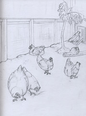 chickens (devinderry) Tags: animalart zooart animaldrawing zoodrawing