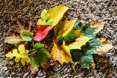 Colors of Fall (Photography by TW) Tags: red orange green fall beautiful leaves yellow carpet leaf moss amazing colorful warm close vibrant burgundy maroon unique awesome sharp change shape assortment detailed canoneosrebelt3i