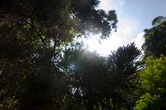 Hiding from the sun () Tags: trees plants sun sunlight hope