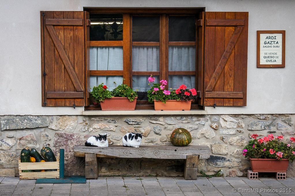 Los gatos y las calabazas
