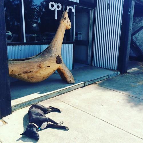 259/350 • sunshine. dog. ride the wild goat • #259_2015 #fishcreek #gippsland #gallery #dog #Spring2015