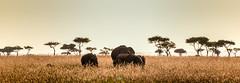 DSC_2554 (Jorge kaplan) Tags: africa nikon kenya safari mara d750 nikkor kenia masai 28300mm masaimara