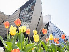 Spring is here (Fabien Berdah) Tags: flowers red orange toronto canada colors yellow architecture spring colours tulips crystal may shapes to rom downtowntoronto bloorstreet tulipes 2015 6ix