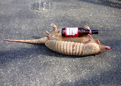 Texas Armadillo (The Old Texan) Tags: armadillo dead texas beer roadkill