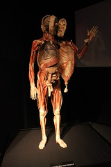 Science World - October 15, 2015 (rieserrano) Tags: body human bodyworlds plastination