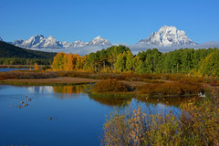 A Fine Day - Oxbow Bend - Grand Tetons - 1137b+ (teagden) Tags: autumn mountain fall nature water fog clouds river landscape photography geese nikon bend fallcolors grand autumncolors snakeriver wyoming grandtetons teton tetons grandteton changingcolors canadageese oxbow naturephotography grandtetonnationalpark fineday earlyfall landscapephotography tetonmountains oxbowbend jenniferhall jenhall jenhallphotography jenhallwildlifephotography