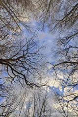 (Ken Scott) Tags: november autumn trees sky usa fall silhouette michigan lakemichigan greatlakes baretrees hdr freshwater voted leelanau pyramidpoint 2015 45thparallel uplook manitouislands sbdnl sleepingbeardunenationallakeshore mostbeautifulplaceinamerica backbage