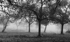 Nebula (heinrich_511) Tags: trees blackandwhite mist bird birds fog nebel heart meeting nebula